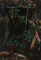 Carnap I, 2009 88×125cm