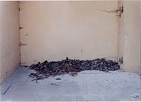 Gesolei, 2000 85×108cm